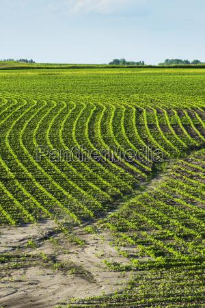 blau landwirtschaftlich farbe horizont amerikanisch gruen