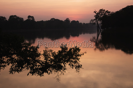 angkor wat sunset with tree branch