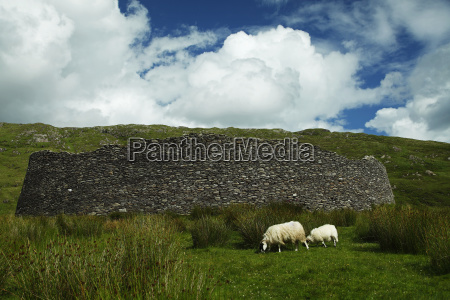 staigue stone fort on the wild