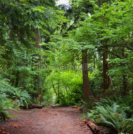 trail through a lush forest vancouver