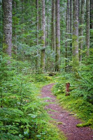 trail through a lush forest near