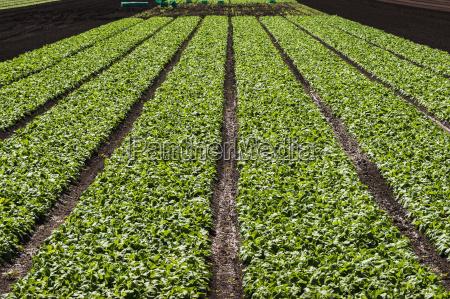 landwirtschaftlich farbe boden erdboden erde erdreich