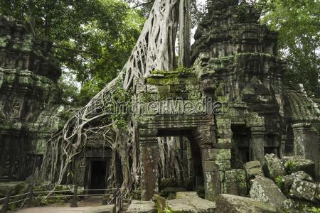 ta prohm impressive temple in angkor