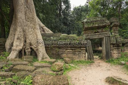 ta, prohm, eindrucksvoller, tempel, in, der, angkor-gegend - 25505726