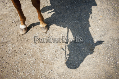 horse legs and shadow of horse