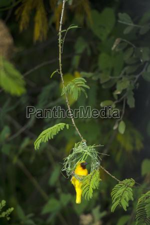 blatt baumblatt farbe park vogel nationalpark
