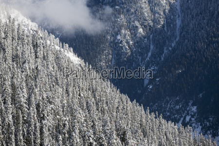 fresh snow on forest covered mountainsides