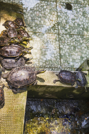 turtles at the official god of