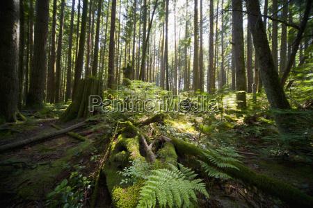 forest with sunlight illuminating plants on