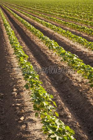 bestellen ordern landwirtschaftlich boden erdboden erde