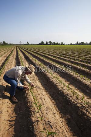 blau kasse blatt baumblatt gesundheit landwirtschaftlich
