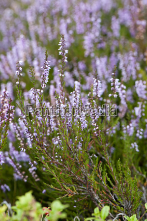 detail farbe blume pflanze gewaechs bluete
