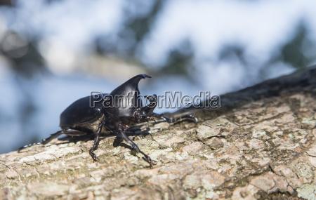 fahrt reisen detail farbe baum insekt