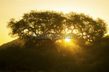 tree silhouetted by the sun at