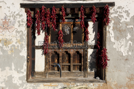 dried red peppers hanging in a