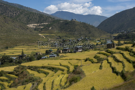 terraced farmland in a valley bhutan