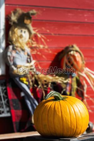 orange pumpkin with decorative scarecrows in