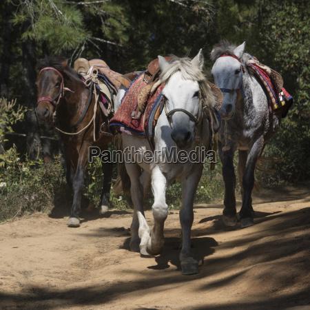 horses, on, the, taktsang, trail;, paro, - 25527146