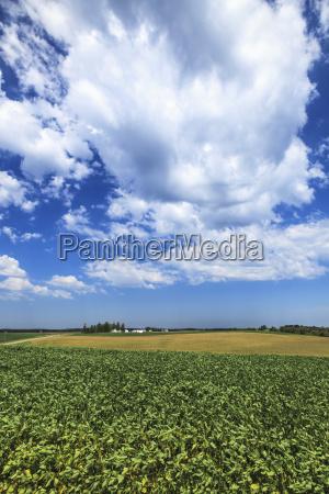 blau landwirtschaftlich farbe baum horizont amerikanisch