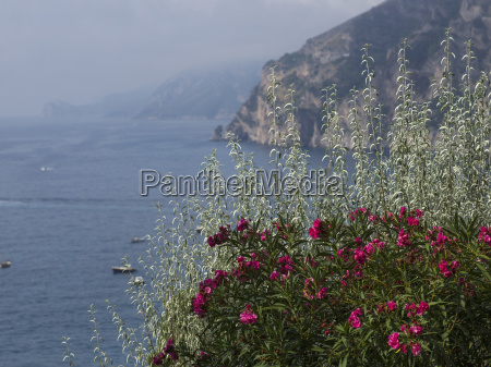 pink flowers blossoming in the foreground