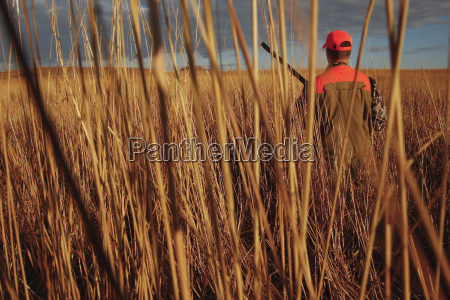pheasant hunter in wild grass