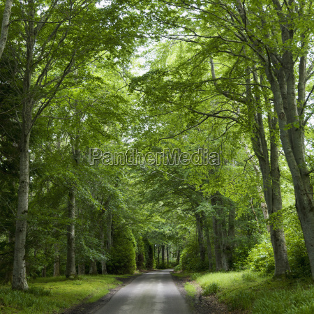 lush green trees and grass line