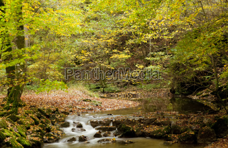 a tranquil creek flowing through a