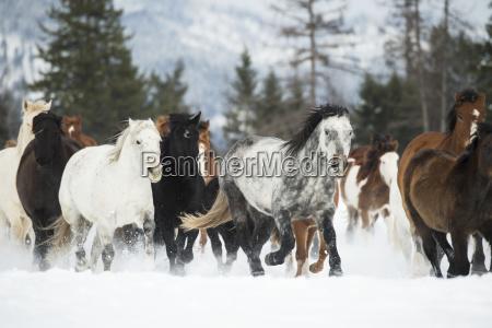 fahrt reisen farbe baum amerikanisch pferd