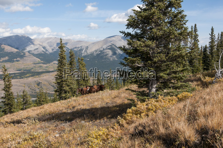 horses with saddles on a mountainside