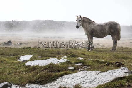 a wild white horse standing in
