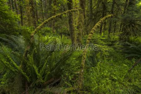 lush rainforest haida gwaii british columbia