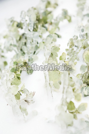 abstract of faded green foliage on