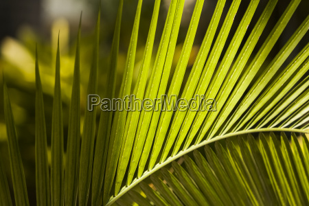 close up of a plant leaf