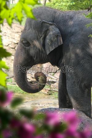 tier saeugetier wild elefant wildlife afrikanerin