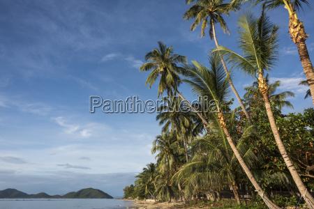 palm trees line the beach along