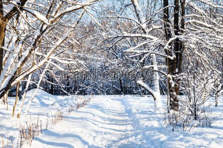 schneebedeckter fussweg zum stadtpark im winter