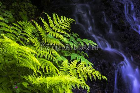 plants grow beside a small stream