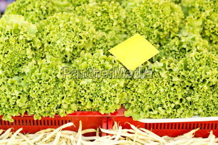 fresh lettuce leaves fruits and vegetables