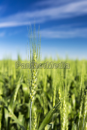 landwirtschaftlich makro grossaufnahme macro makroaufnahme macroaufnahme