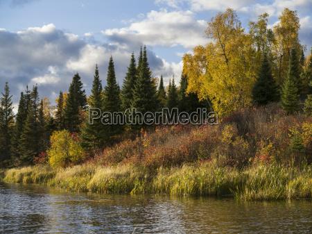 autumn coloured foliage on the trees
