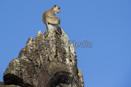 monkey atop the ruins angkor wat