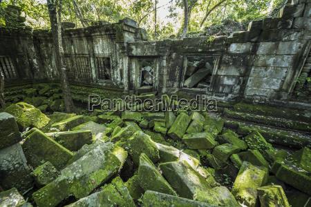 moss growing on fallen stones in