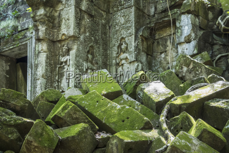 moss growing on fallen stone with