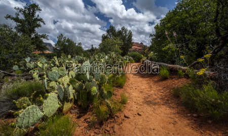 a red rock trail surrounded by