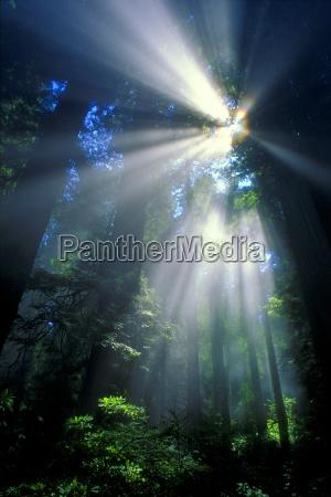 sunlight filtering through dense forest foliage