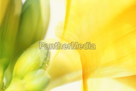 eine florale komposition