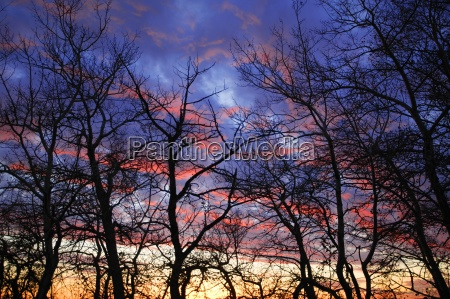branches silhouetted against sunset
