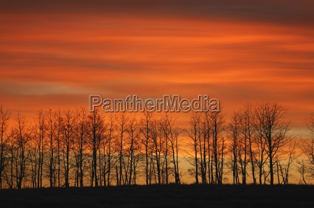 silhouette of trees against sunset