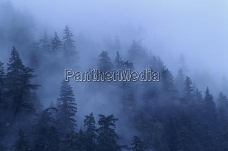 baum baeume sonnenuntergang wolke nebel sonnenaufgang