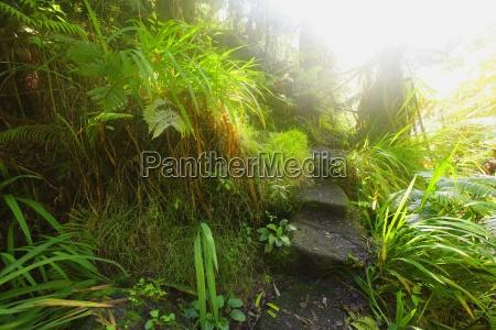 path through lush plants hawaii usa